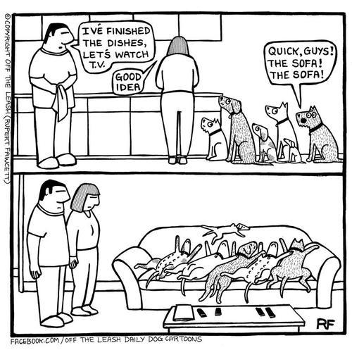 Dog funny1