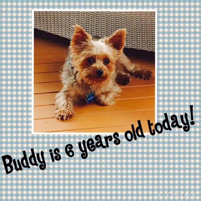 buddy is 6