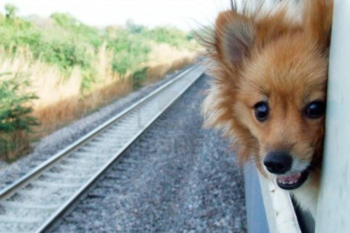 Dogs On Amtrak Trains