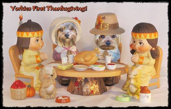 Yorkie Thanksgiving