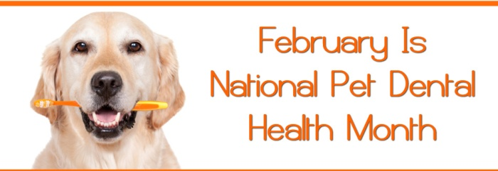 dental health month for pets