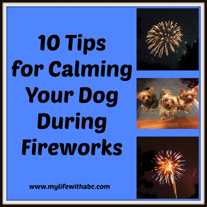 10 tips for calming your dog