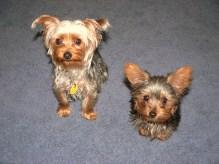 Artie & Buddy